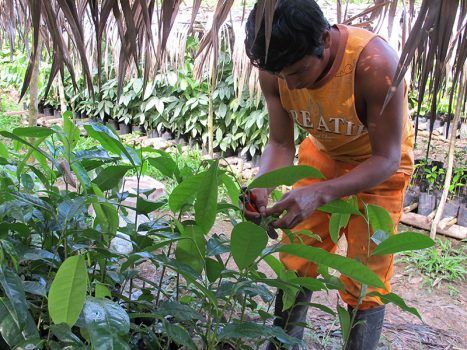 Plant your Future: Restoring the Amazon One Tree at a Time, Aracari Travel