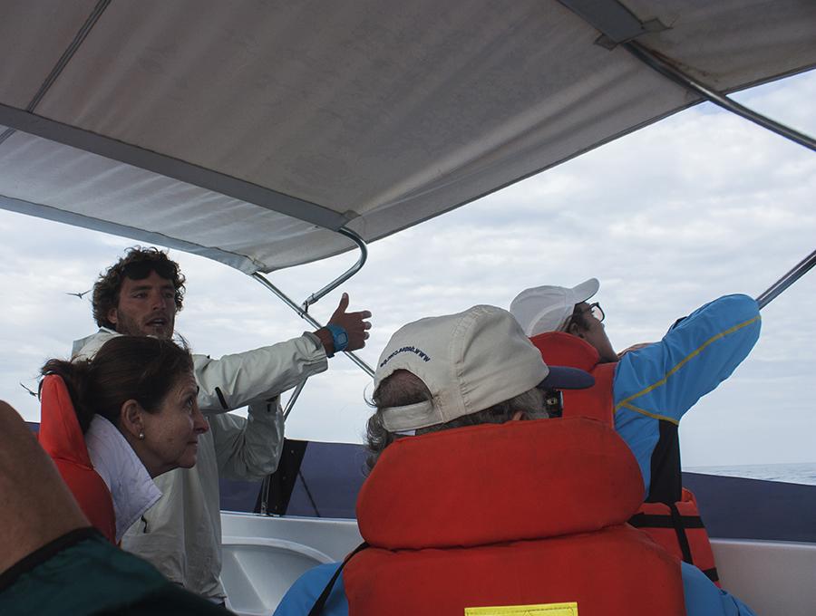 Whale Watching in Peru, Aracari Travel