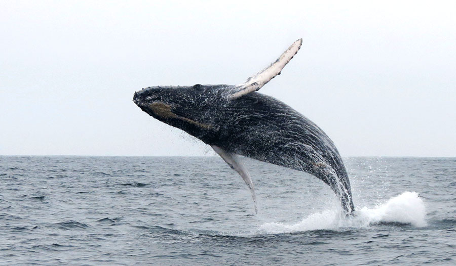 Whale Watching in Peru