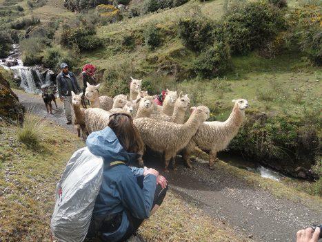 Two Day Lares Trek in Peru, Aracari Travel