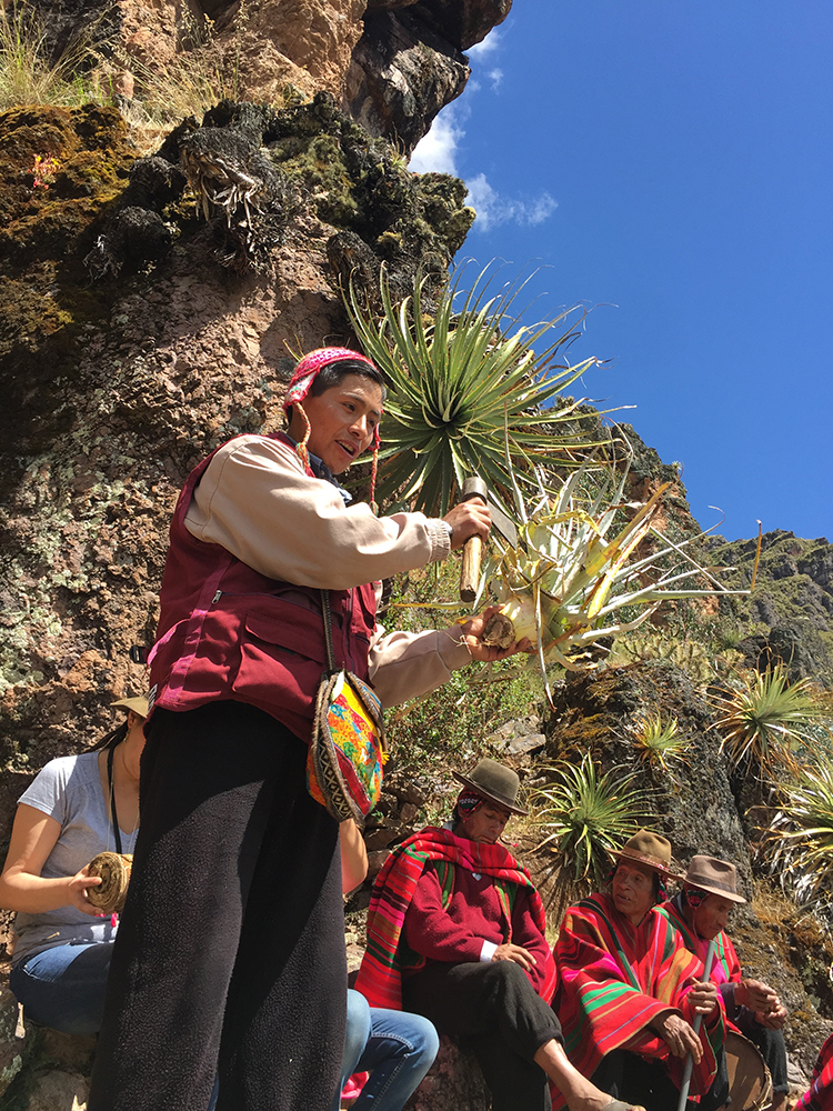 The Route of the Achupalla with Tierra de los Yachaqs, Aracari Travel