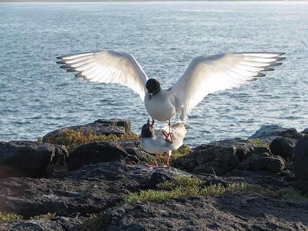 Galapagos-aves