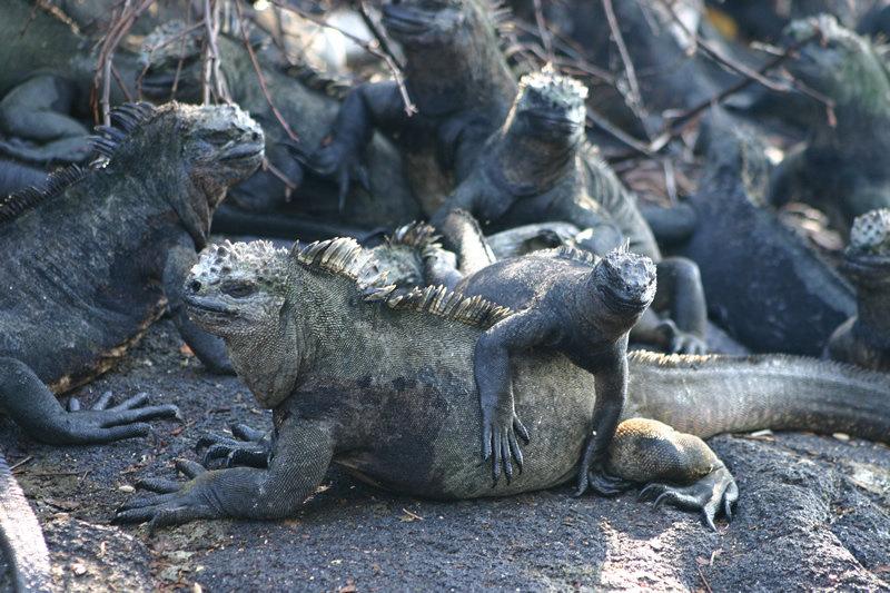 luxury travel galapagos