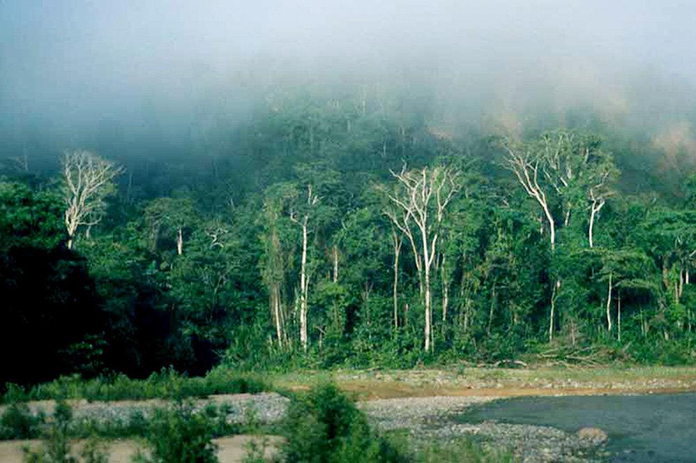 Madidi national park - borisandina