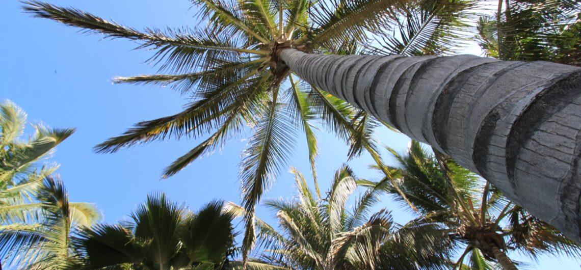 Best Luxury Beach Hotels in Mancora