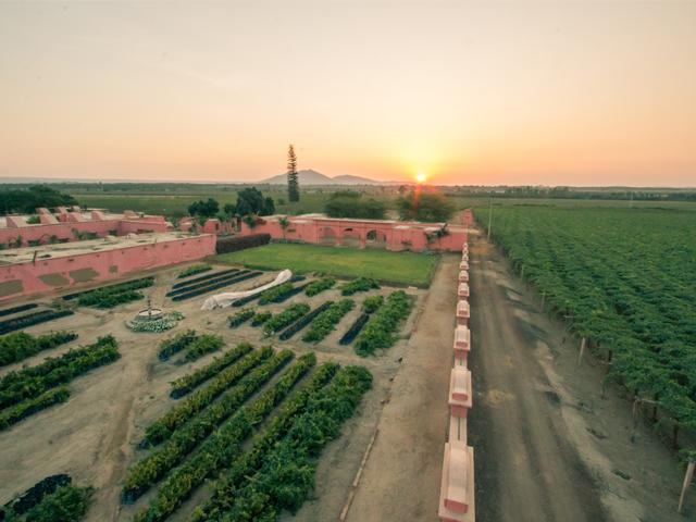 Hacienda Tacama – Wine and Pisco in Ica