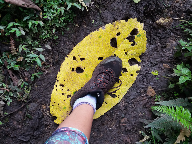 Yumbilla Waterfall Hike: A walk in the cloud forest, Aracari Travel