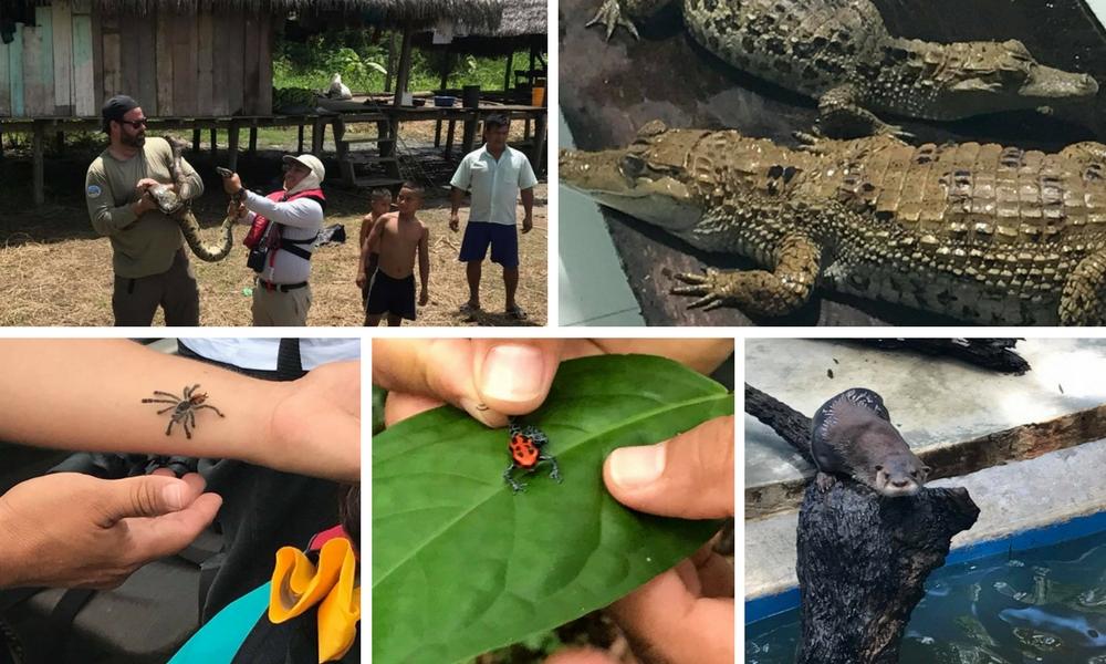 Aria Amazon Cruise: A Luxury Jungle Escape, Aracari Travel