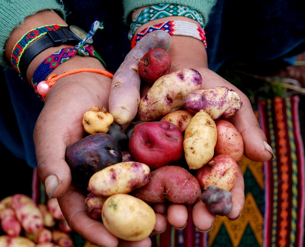 Peru culinary experience: Potato and Ají