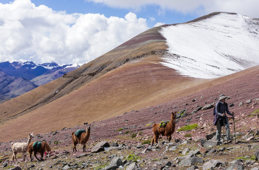 Llamas and alpacas on the Rainbow Mountain Peru trek