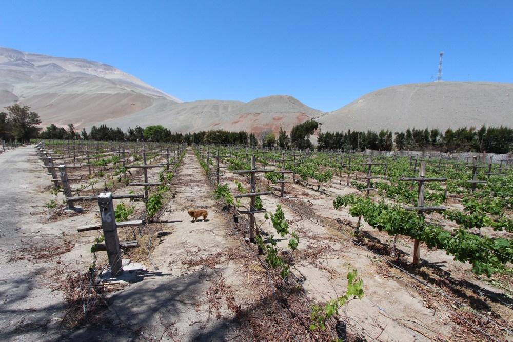 Arequipa's Pisco Route (3)