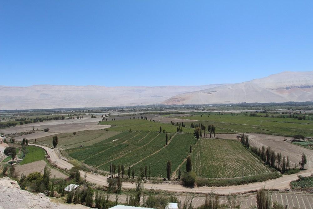 Arequipa's Pisco Route (9)