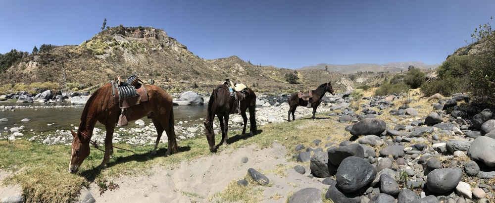 horseback ride in colca horses