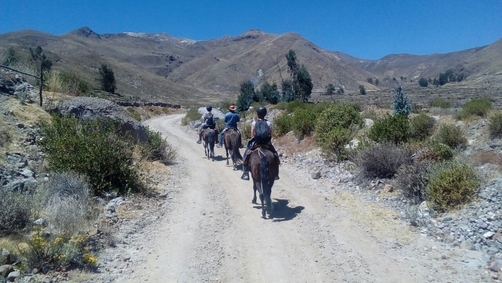 horseback ride in colca walking