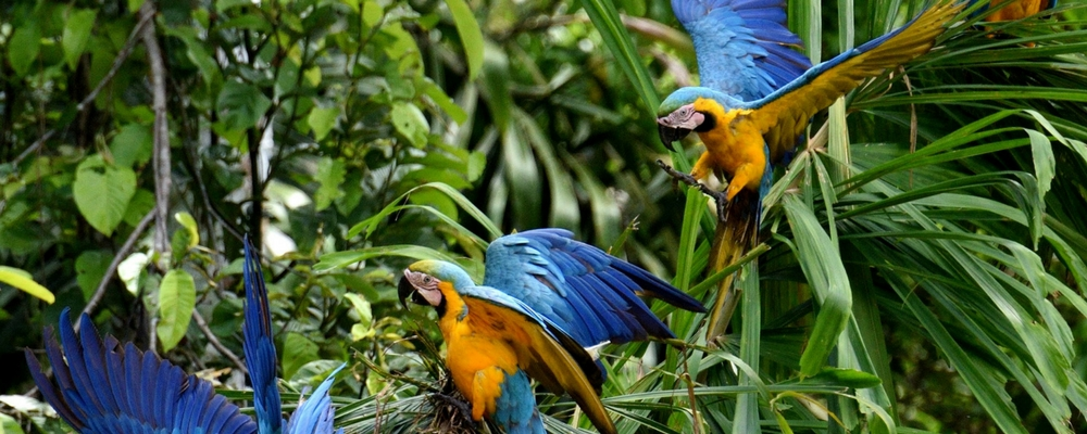 Best time to travel to Peru, Aracari Travel