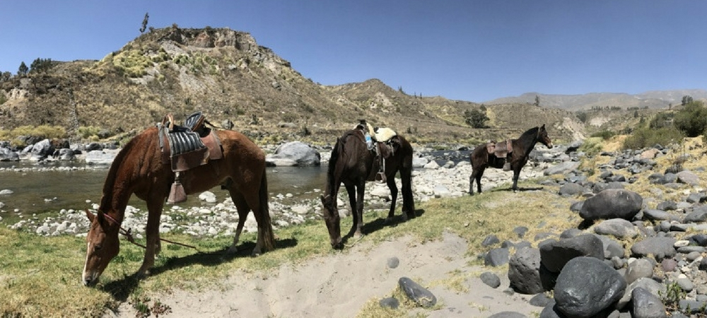 The Best Horse Riding in Peru, Aracari Travel
