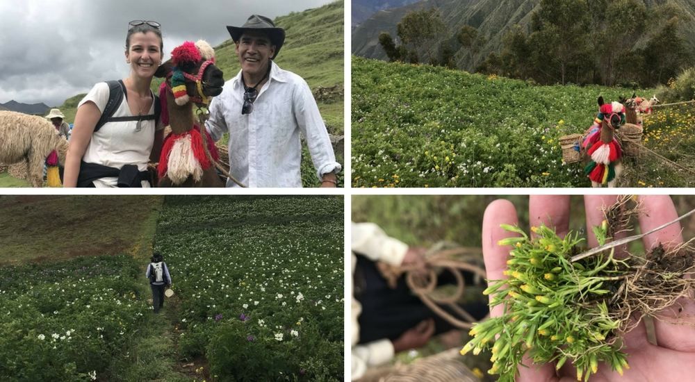 The Real Sacred Valley: Cultural Peru Hike, Aracari Travel