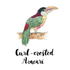 2018 Year of the Bird, Aracari Travel