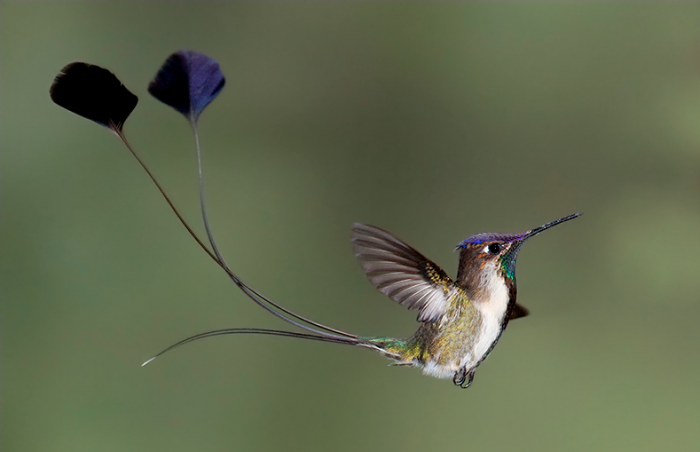 A Guide To Peru Wildlife Watching, Aracari Travel