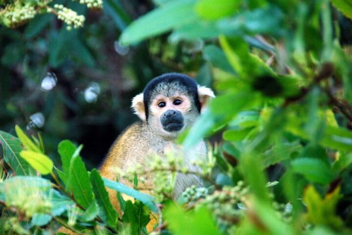 Luxury Travel in the Peruvian Amazon: an insider guide, Aracari Travel