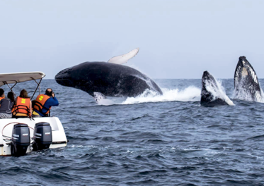 Whale Watching - Credit: Damian Villagra