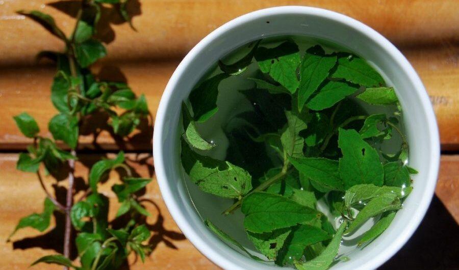 Muña And Its Medicinal Herbal Properties – Aracari Travel