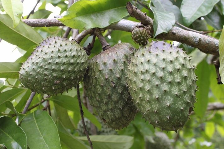 A Guide To Peruvian Superfoods, Aracari Travel