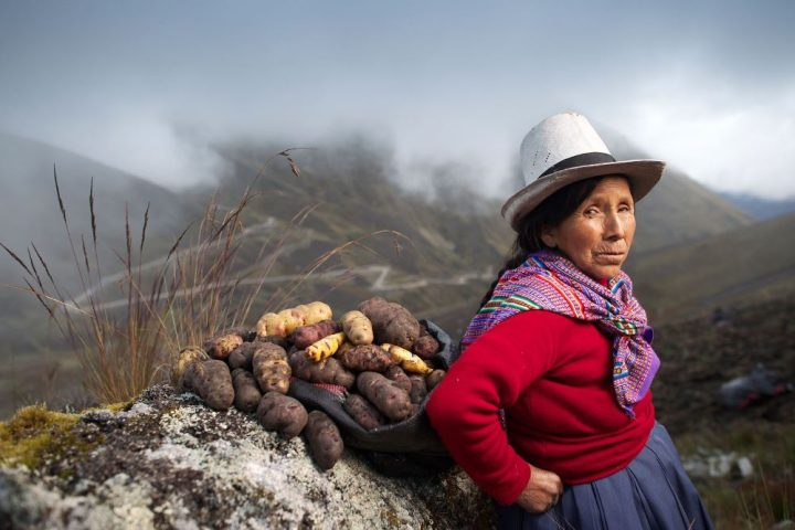 A Guide To Peruvian Potatoes, Aracari Travel