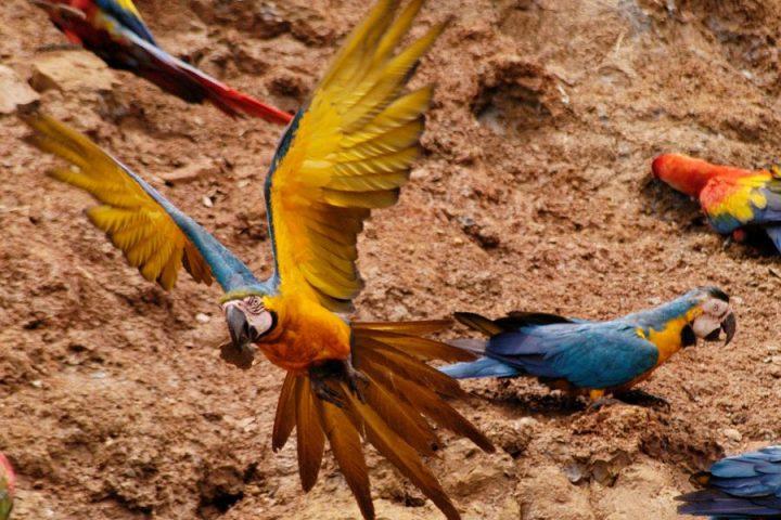 Wildlife in Peru: A Nature Lover's Guide To Seasonal Peru Travel, Aracari Travel