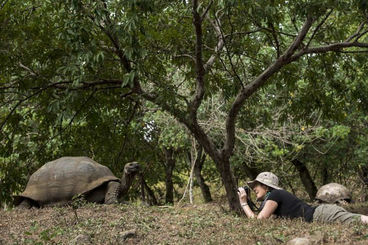 Model with Galapagos Giant TortoiseKT 006 Sonia Kraemer D'AnnunzioEl Chato RanchSanta CruzGalapagosEcuador, South America