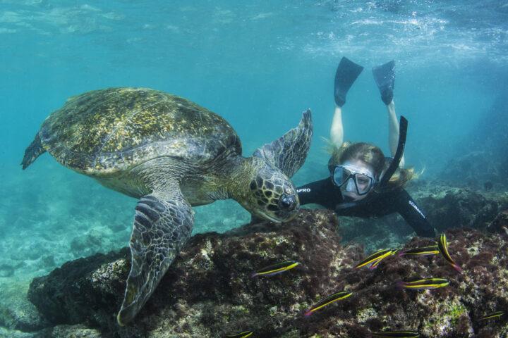 Model With Galapagos Green Turtle (Chelonia mydas agassisi)KT 013 Florencia CeideSullivan BaySantiagoGalapagosEcuador, South America
