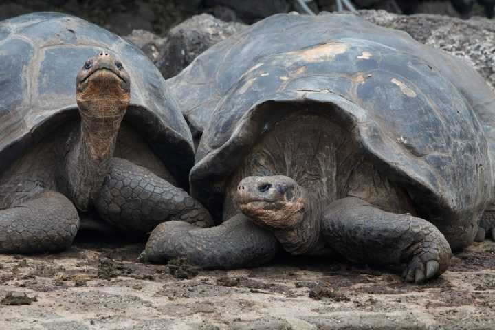 How to Plan a Trip to the Galapagos, Aracari Travel