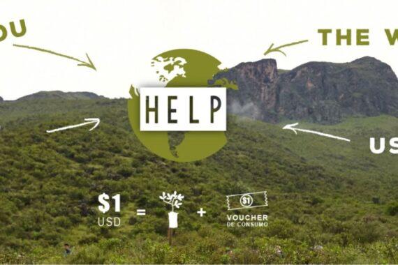 reforestation program