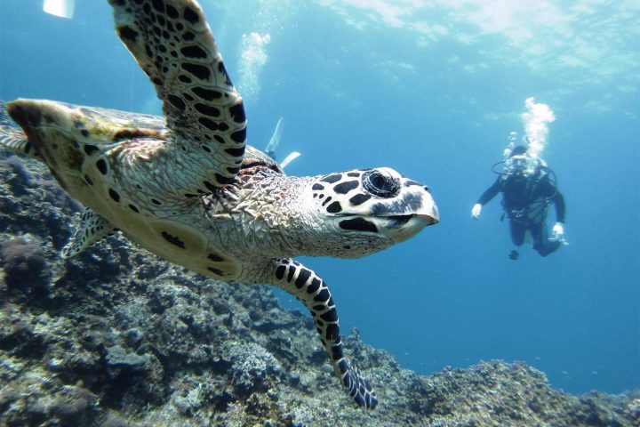 Marisol's insider guide to booking a trip to the Galapagos Islands, Aracari Travel